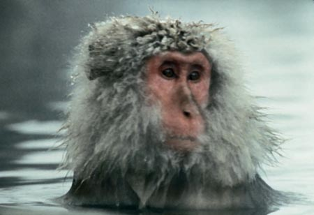 Baraka - Snow Monkey (Film Still)